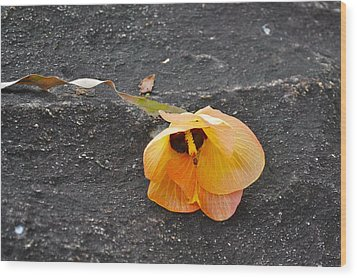 Fallen Flower Wood Print