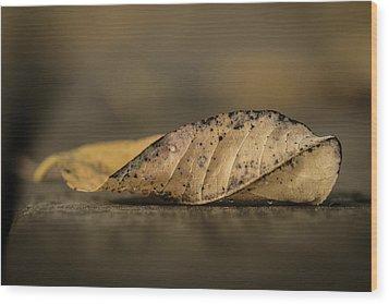 Fallen Leaf Wood Print by Hyuntae Kim