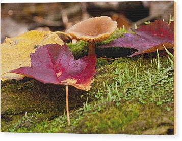 Wood Print featuring the photograph Fallen Leaves And Mushrooms by Brent L Ander