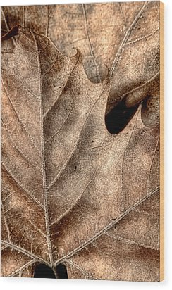 Fallen Leaves II Wood Print by Tom Mc Nemar