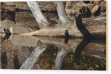 Fallen Tree Mirror Image Wood Print by Debbie Oppermann