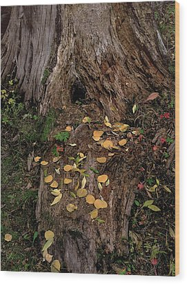 Fallen Tree Offerings Wood Print