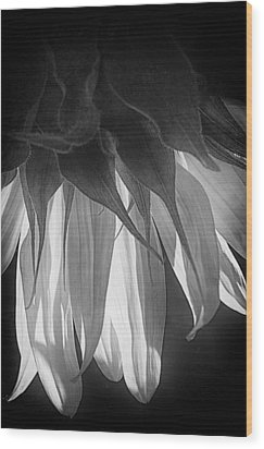 Falling Monochrome  Wood Print