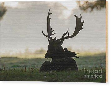 Fallow Deer With Friend Wood Print