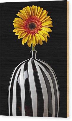 Fancy Daisy In Stripped Vase  Wood Print by Garry Gay