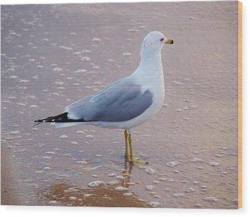 Fancy Gull Wood Print
