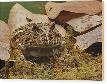 Wood Print featuring the photograph Fantasy - Horned Frog by Nikolyn McDonald