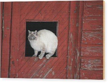 Farm Kittie Wood Print by Shawna Dockery