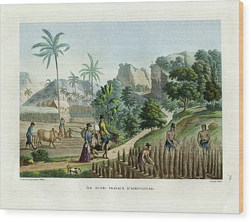 Farming On Guam Island Wood Print by d apres Pellion