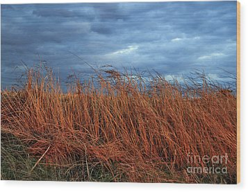 Farmland Winter Wood Print by Susan Yates