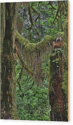 Fascinating Hoh Valley - Hoh Rain Forest Olympic National Park Onp Wa Usa Wood Print by Christine Till