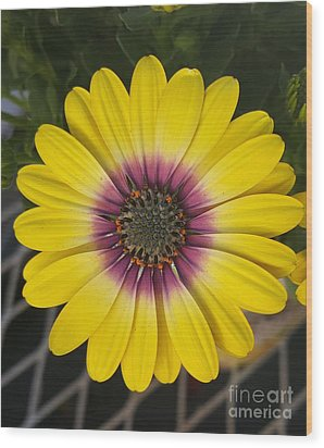 Fascinating Yellow Flower Wood Print by Jasna Gopic