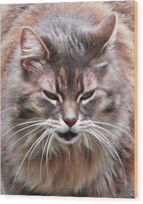 Fat Cats Of Ballard 4 Wood Print