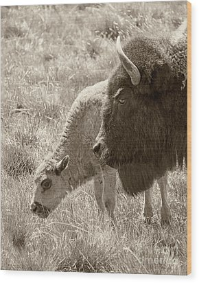 Wood Print featuring the photograph Father And Baby Buffalo by Rebecca Margraf