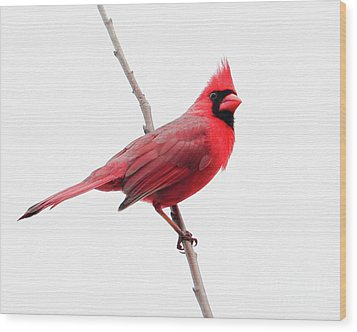 Father's Day Cardinal Wood Print