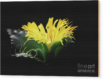 Wood Print featuring the photograph Faucaria Tigerina Tiger's Jaw by Charline Xia