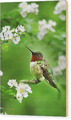 Fauna And Flora - Hummingbird With Flowers Wood Print
