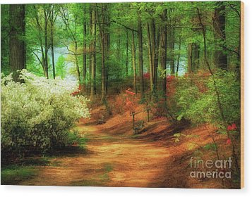 Favorite Path Wood Print by Lois Bryan