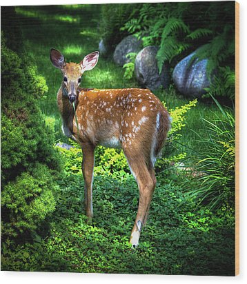 Wood Print featuring the photograph Fawn In The Garden by David Patterson