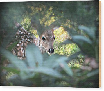 Fawn Peeking Through Bushes Wood Print