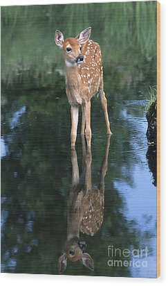 Fawn Reflection Wood Print by Sandra Bronstein