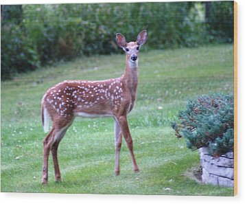 Fawn Standing Wood Print by Geralyn Palmer