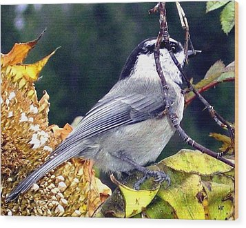 Feast For A Chickadee Wood Print by Will Borden