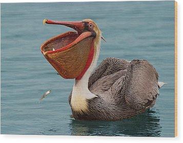 Wood Print featuring the photograph Feasting Brown Pelican  by Ram Vasudev
