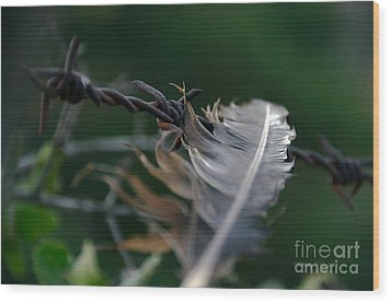 Feather And Barbed Wire Wood Print