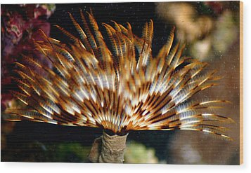 Feather Duster Wood Print by Anthony Jones