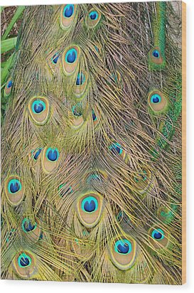 Wood Print featuring the photograph Feather Finesse by Margaret Bobb