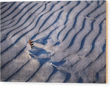 Wood Print featuring the photograph Feather In Sand by Michelle Calkins