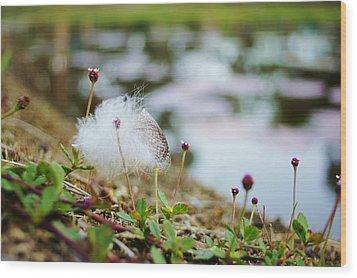 Feather Wood Print by Lynda Dawson-Youngclaus