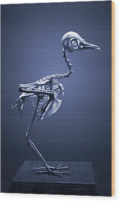 Wood Print featuring the photograph Featherless In Blue by Joseph Westrupp