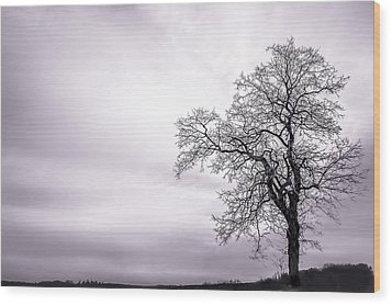 February Morning Wood Print