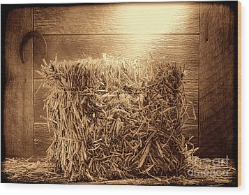 Feed Wood Print by American West Legend By Olivier Le Queinec