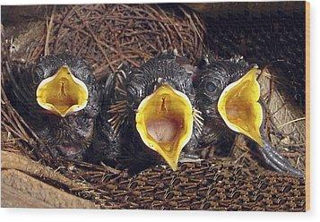 Feed Me Wood Print by Judi Saunders