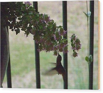 Feeding Hummingbird Wood Print