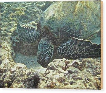 Feeding Sea Turtle Wood Print by Michael Peychich