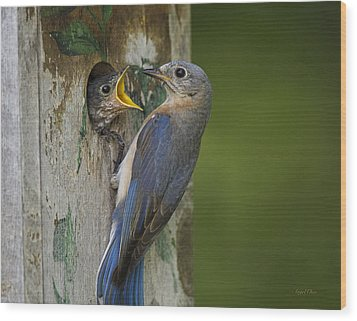 Wood Print featuring the photograph Feeding Time by Angel Cher