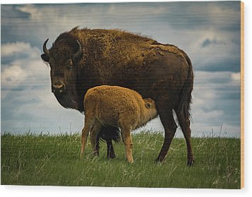 Wood Print featuring the photograph Feeding Time II by Gary Lengyel