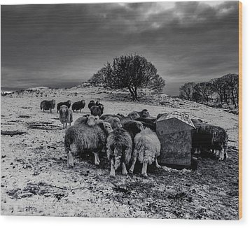 Wood Print featuring the photograph Feeding Time by Keith Elliott