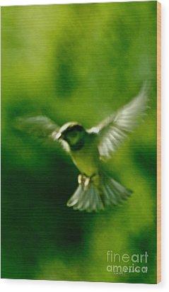 Feeling Free As A Bird Wall Art Print Wood Print