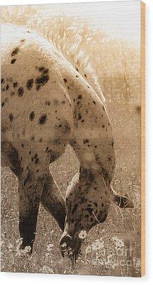 Feeling Groovy Wood Print by Toma Caul
