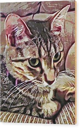 Feline Fancy Wood Print by David G Paul