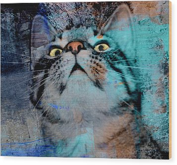 Feline Focus Wood Print by Kathy M Krause