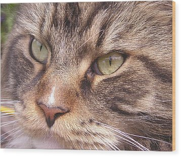 Feline Perfection Wood Print by Joanne Simpson