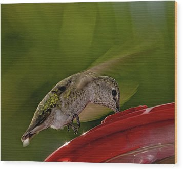 Wood Print featuring the photograph Female Anna's Hummingbird H40 by Mark Myhaver