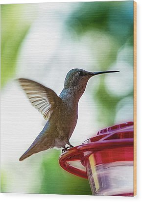 Wood Print featuring the photograph Female Anna's Hummingbird V24 by Mark Myhaver