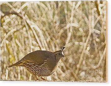 Female California Quail Wood Print